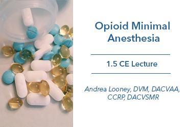 Opioid Minimal Anesthesia