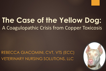 The Case of the Yellow Dog: A Coagulopathic Crisis from Copper Toxicosis